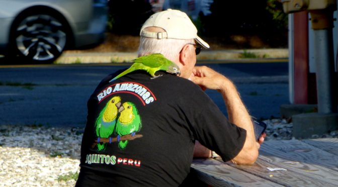 "A Monk Parakeet At ""Orleans Live"" On Cape Cod"