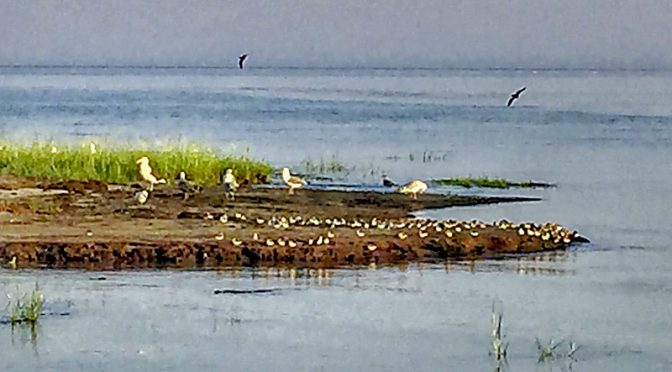 Early Morning Birds At Boat Meadow Beach On Cape Cod