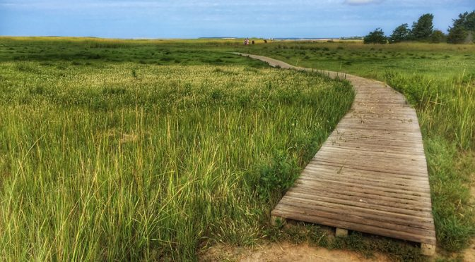 Wellfleet Bay Wildlife Sanctuary Is A Great Place For The Whole Family