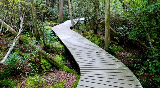 White Cedar Swamp Trail In Wellfleet On Cape Cod