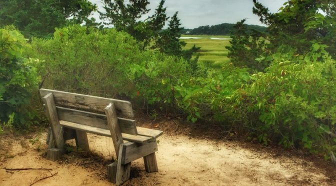 Relax At The Wellfleet Bay Wildlife Sanctuary On Cape Cod.
