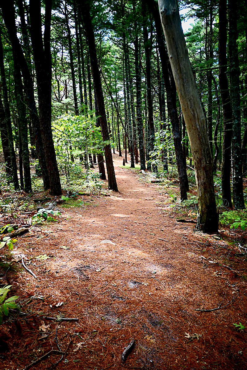 Hiking John Kenrick Woods In Orleans On Cape Cod.