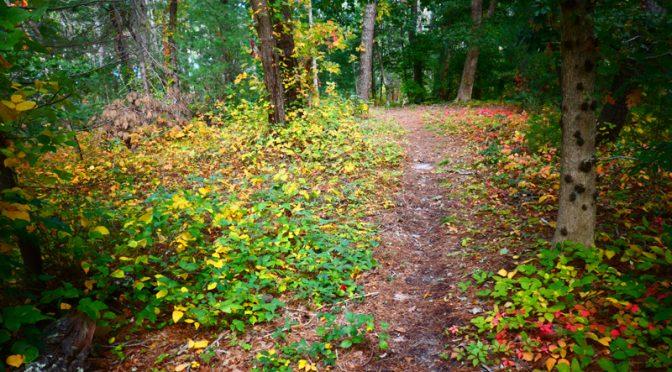 Pretty Fall Hike On Cape Cod.