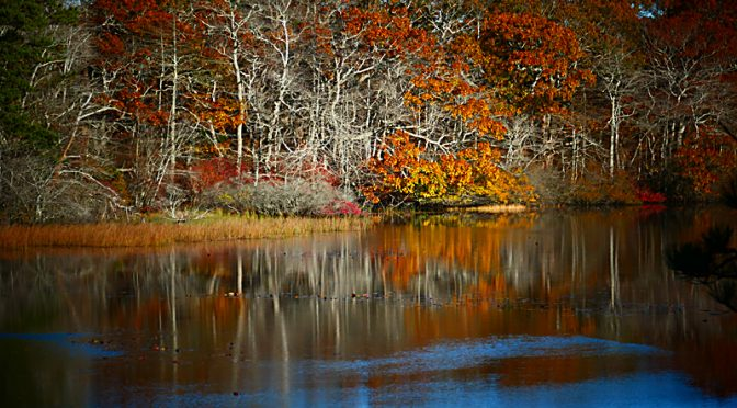 Pretty Fall Reflection On Beech Forest Trail In Provincetown On Cape Cod