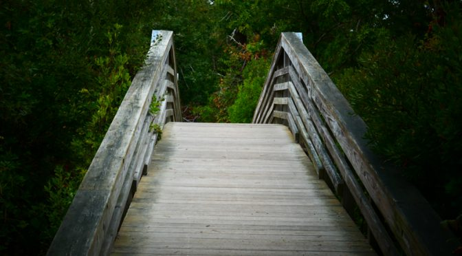 The Bridge At Wiley Park In Eastham On Cape Cod.