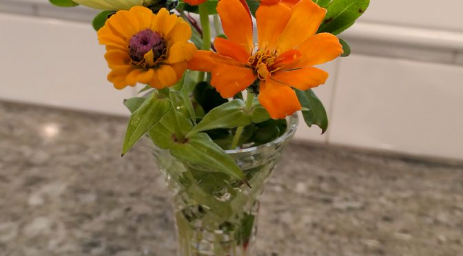 I Finally Cut The  Last Of My Zinnias Here On Cape Cod!