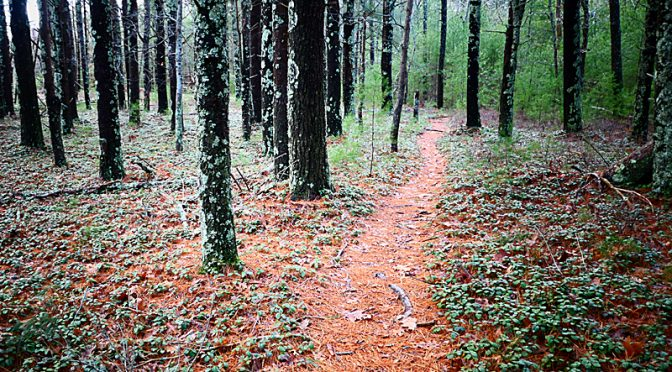 Awesome Trail At Nickerson State Park On Cape Cod Using AllTrails App!