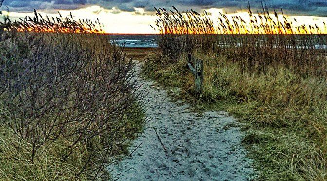 Sunset Through The Beach Grass On Cape Cod Bay.