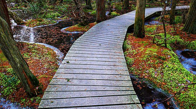 Atlantic White Cedar Swamp Trail On Cape Cod On The AllTrails App.