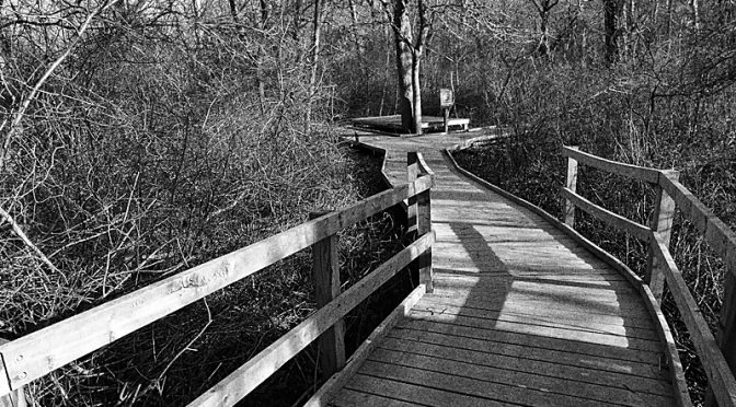 Red Maple Swamp Trail Boardwalk At Fort Hill On Cape Cod… In Black And White Or Color?