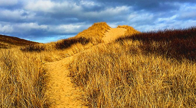 Pamet Trail In Truro On Cape Cod Is A Favorite On The