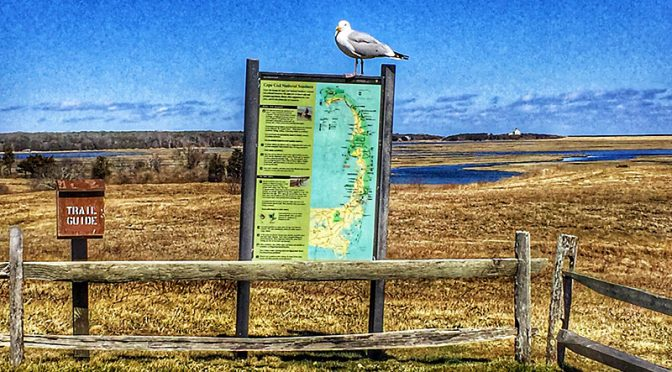Picture Perfect Day At Fort Hill Overlook On Cape Cod!