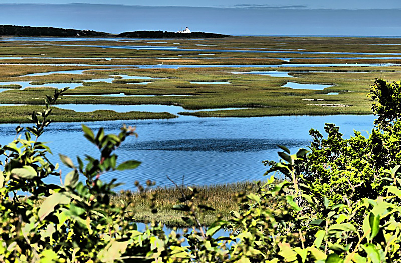 Red Maple Swamp Trail At Fort Hill On Cape Cod Is On The