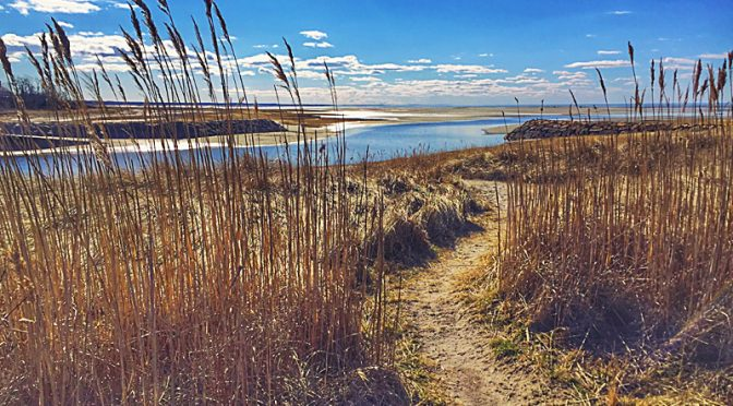 One Of Many Pretty Beach Trails On Cape Cod.