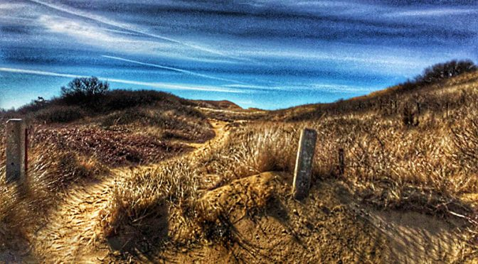 So Many Pretty Trails To The Beach In Wellfleet On Cape Cod.