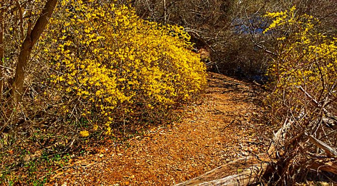 Spring On The Trail At The Wellfleet Bay Wildlife Sanctuary On Cape Cod.