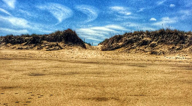 Trail Through The Dunes At Coast Guard Beach On Cape Cod.