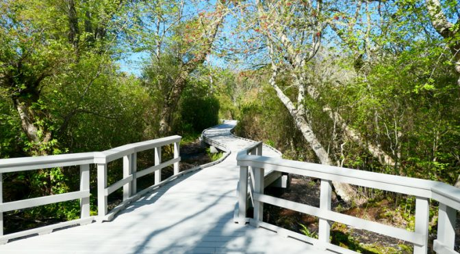 Love The Boardwalk On The Red Maple Swamp Trail At Fort Hill On Cape Cod!