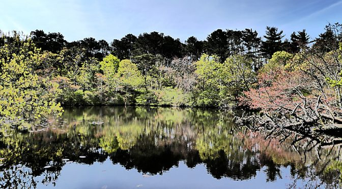 Gorgeous Reflection At The Wellfleet Bay Wildlife Sanctuary On Cape Cod.