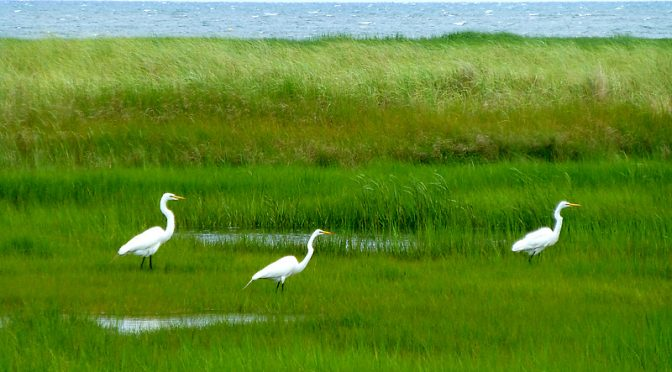 Love The Salt Marsh In The Early Mornings On Cape Cod!