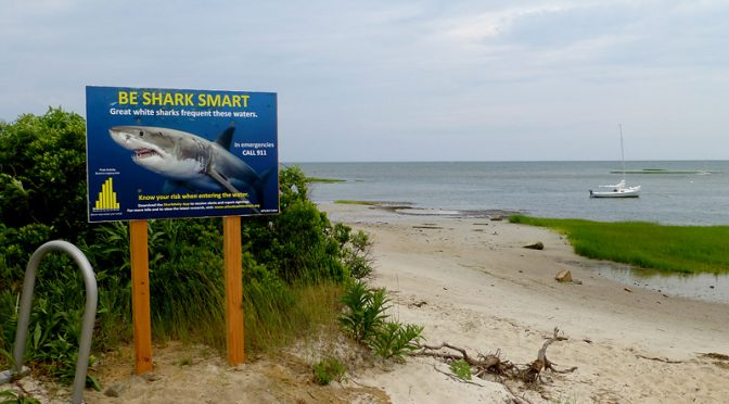 New Shark Signs At All Of The Beaches On Cape Cod.