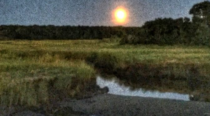 Harvest Moon Over The Salt Marsh On Cape Cod.