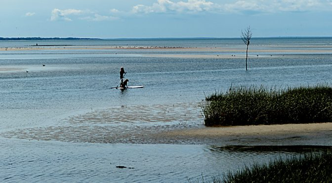 Paddleboarding With Her Dog At Rock Harbor On Cape Cod.