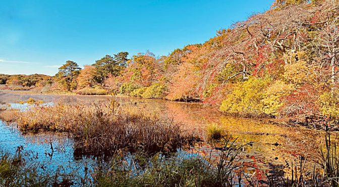 Fall Colors On Beech Forest Trail In Provincetown On Cape Cod.