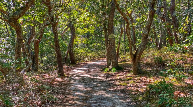 Perfect Time For A Hike On White Cedar Swamp Trail On Cape Cod.