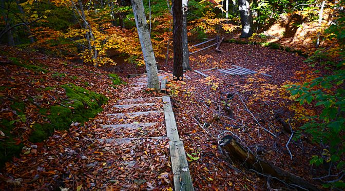 Beech Forest Trail In Provincetown On Cape Cod Was So Pretty With Its Fall Colors.