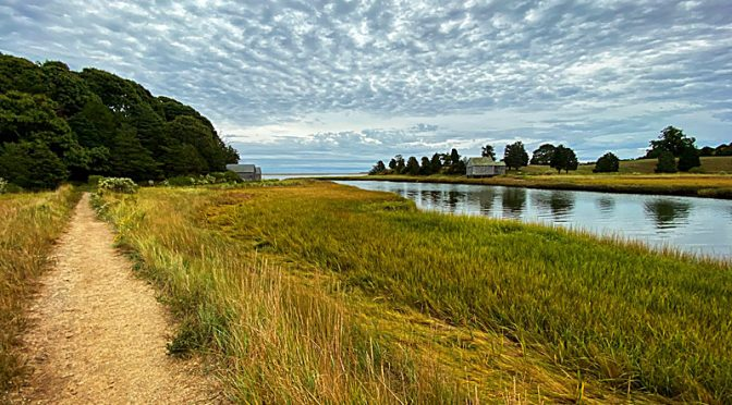Simply Beautiful On Nauset Marsh Trail On Cape Cod.