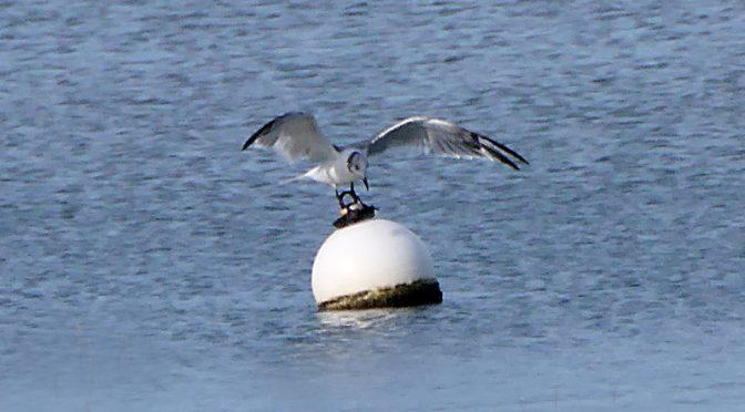 Balancing Act At Hemenway Landing On Cape Cod.