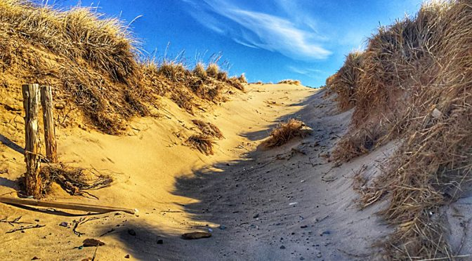 The Sand Dunes In Wellfleet On Cape Cod Are Spectacular!
