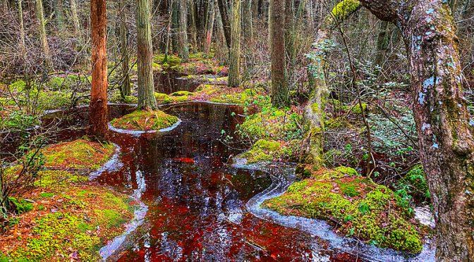 White Cedar Swamp Trail In Wellfleet On Cape Cod Was Magical!