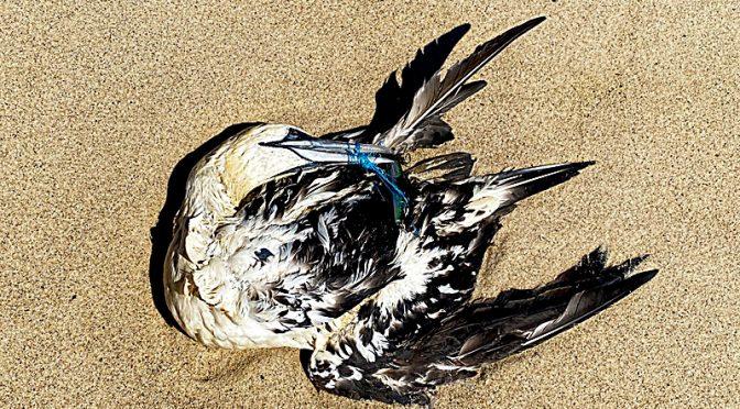 A Sad Day On The Beach.