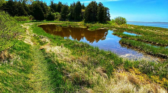 Pretty Reflection On The Nauset Marsh Trail On Cape Cod.