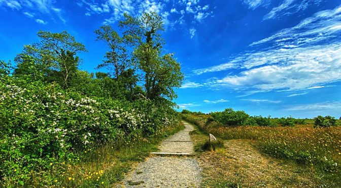 Beautiful Fort Hill Trail On Cape Cod.