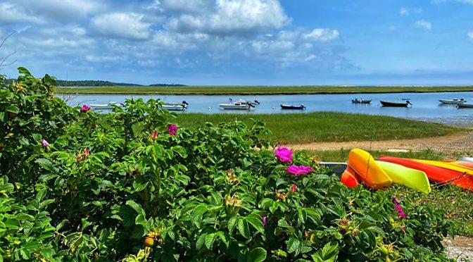 Hemenway Landing Through The Roses On Cape Cod!