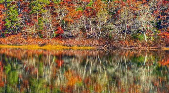 Beautiful Fall Colors At Nickerson State Park On Cape Cod.