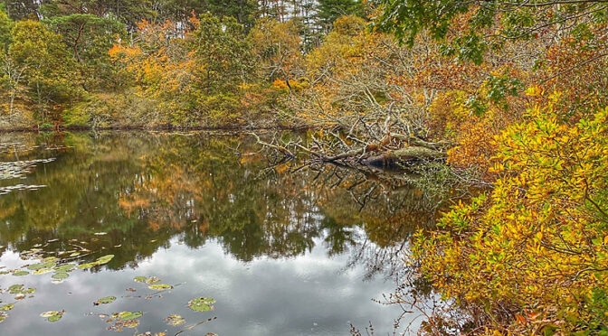 Pretty Reflections At The Wellfleet Bay Wildlife Sanctuary