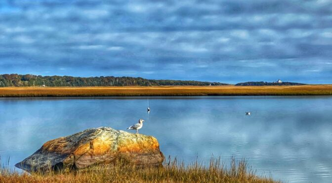 Looking Across Nauset Marsh On Cape Cod.