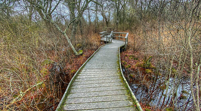 Love The Boardwalk On The Red Maple Swamp Trail At Fort Hill On Cape Cod.