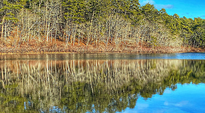 Still Waters On Little Cliff Pond In Nickerson State Park On Cape Cod.