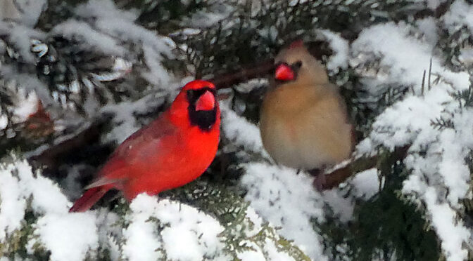 Red And Birdie Huddled Together In The Snow On Cape Cod