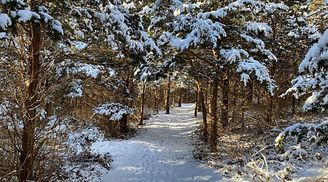 Beautiful Day For A Snowy Hike By Nauset Marsh On Cape Cod!