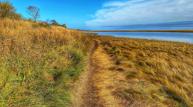 Fort Hill Trail By Nauset Marsh On Cape Cod.