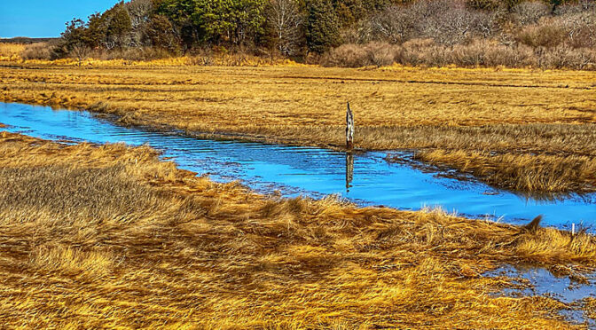 What Is This Post In The Salt Marsh On Cape Cod?