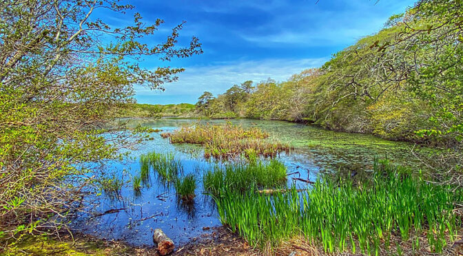 Gorgeous View Of A Kettle Pond In Provincetown On cape Cod!