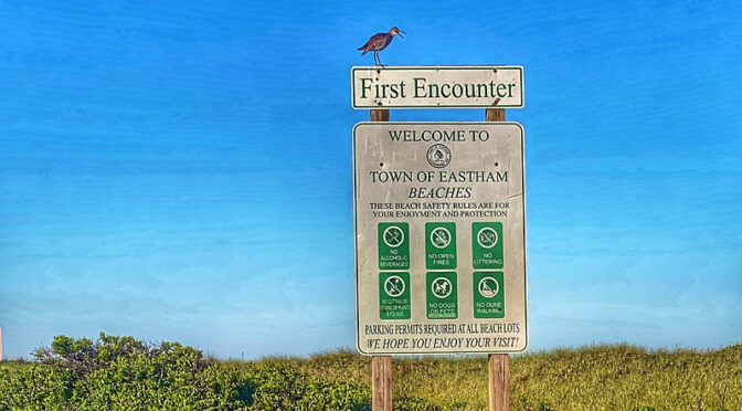 First Encounter Beach On Cape Cod's Welcoming Committee!