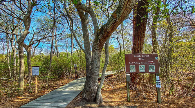 Beech Forest Trail In Provincetown On Cape Cod.